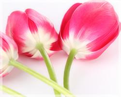 誕生花セラピー